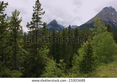 Mountain peaks in Waterton National Park, Alberta Canada; trees in foreground; cloudy day; early summer