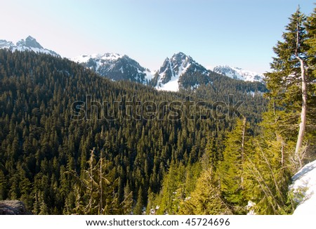 mountain peaks, pine forest and snow