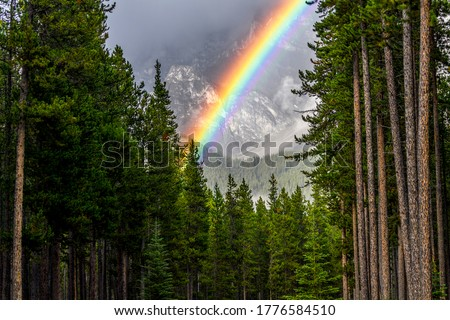 Mountain pine tree forest rainbow. Rainbow in mountain forest