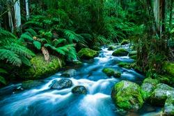 Mountain river cascading through the lush green rainforest