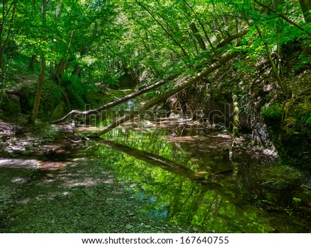 Mountain river flowing through the forest