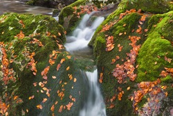 Mountain river gorges and waterfall in autumn leaf colors - Sunik water grove, river Lepenca, Bovec, Slovenia, water background, turquoise, river, stream, autumn leaf, stones, rocks, Soca valley, Trig