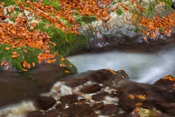 Mountain river gorges in autumn colors - Sunik water grove, river Lepenca, Bovec, Slovenia, water background, turquoise, river, stream, autumn leaf, stones, rocks, Soca valley, Triglav national park