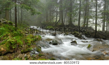mountain river in Carpathian forest