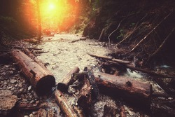 mountain river in the deep sunny forest. natural background. vintage picture