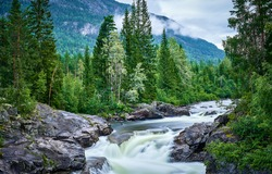 Mountain river in the forest. River wild in mountain forest. Mountain river wild landscape. River in mountains