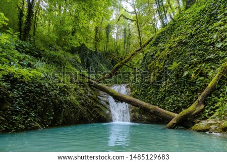 Mountain river in the gorge and stones covered with moss. Waterfall and dense vegetation. Summer.