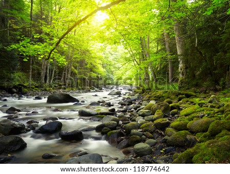 Mountain River in the wood #118774642