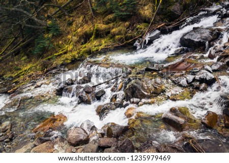 mountain river, mountain gorge, forest landscape, coniferous forest in autumn, logs