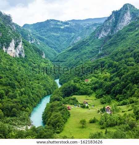 Mountain river Tara and forest in Montenegro #162183626