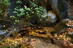 Mountain river with autumn foliage and rocks