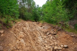 mountain road with deep ruts and mud with traces of cars and green trees.