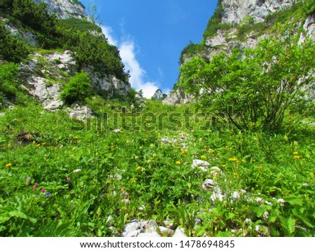 Mountain slope full of blooming wildflowers, lush vegetation and bush vegetation surrounded by rockwalls on both sides and clear blue sky in the back #1478694845