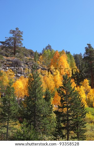 Mountain slopes in California. Shrubs bright autumn colors of orange, red and yellow