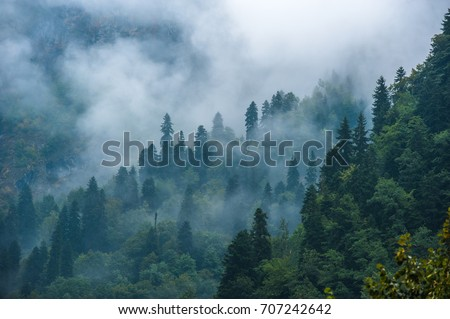 Mountain slopes landscape with fir trees in the fog in Svaneti, Georgia. #707242642