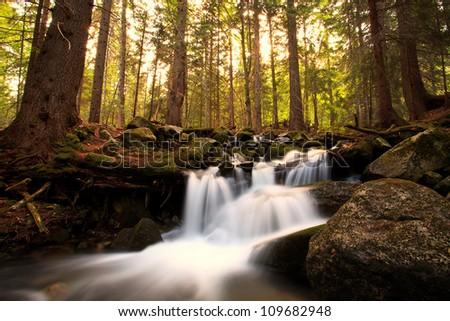 mountain stream in deep bulgarian forest