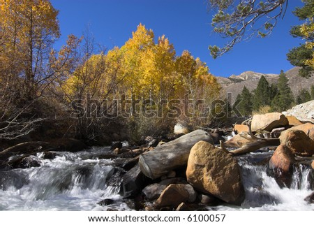 mountain stream in fall splashing over rocks with bright yellow Aspen trees