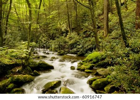 Mountain stream in Great Smoky Mountains - stock photo