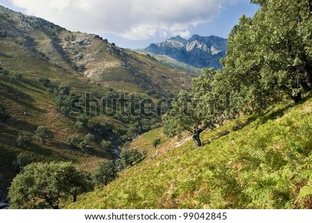 mountain stream in Sierra de Gredos. Spain
