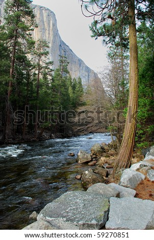 Mountain Stream Pines in Yosemite National Park