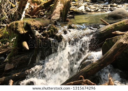 Mountain stream with a raging stream of water among the rocks and fallen tree trunks