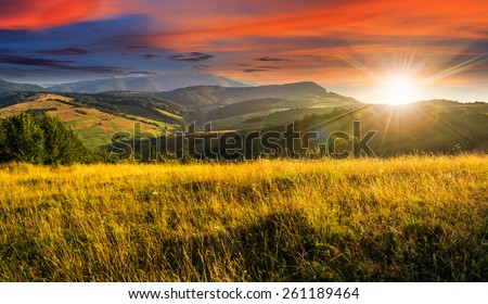 mountain summer landscape. meadow meadow with tall yellow grass and forests on hillside in sunset light