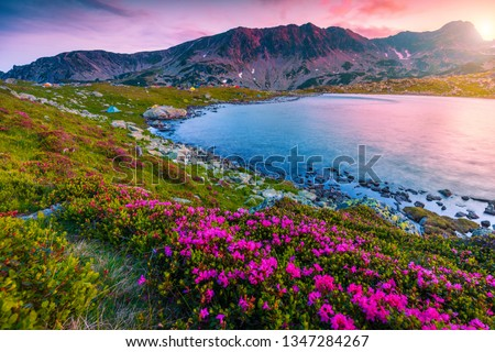 Mountain sunset landscape, fantastic campsite near Bucura lake. Camping place with colorful tents and pink rhododendron flowers at sunset, Retezat mountains, Carpathians, Transylvania, Romania, Europe #1347284267