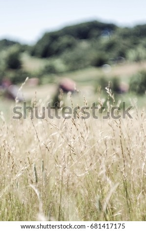 mountain tall grass #681417175