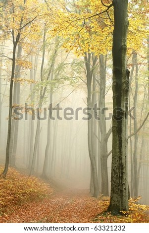 Mountain trail in the misty autumn forest in a nature reserve.