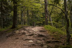 Mountain trail inside the forest. Beautiful scenic, romantic landscape. Roots of trees and stones on path in wild wood. Schwarzwald, Black Forest. Germany.