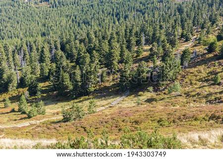 Mountain trail to Sniezne Kotly in the Karkonosze National Park in polish Giant mountains Zdjęcia stock ©