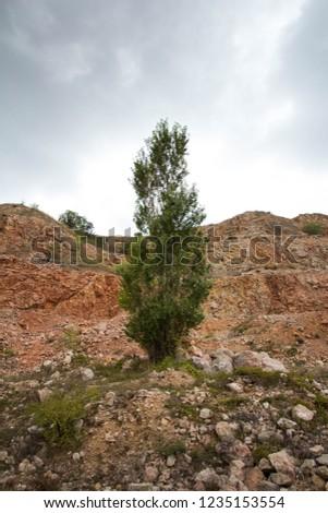 mountain vegetationarid mountain vegetation #1235153554