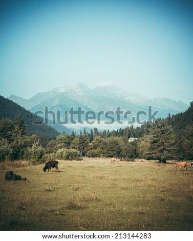 Mountain view in summer in Racha region, Georgia, Caucasus. Toned picture