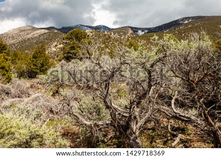 Mountain Vista at Great Basin National Park with ancient trees along Snake Creek Road #1429718369