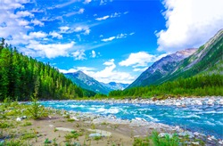 Mountain wild river stream landscape in river valley at summer