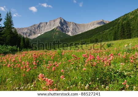 Mountain Wildflowers Kananaskis Country Alberta Canada