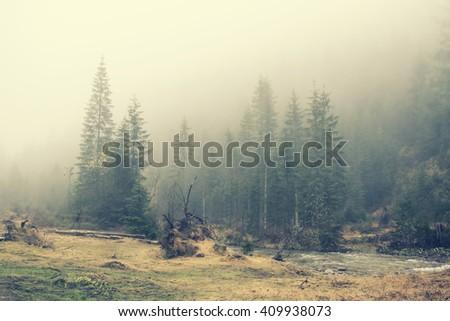 mountain wildlife landscape....