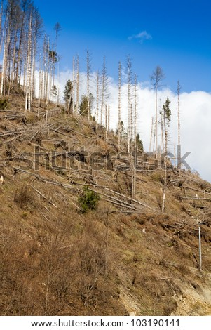 Mountain with trees destructed by hurricane