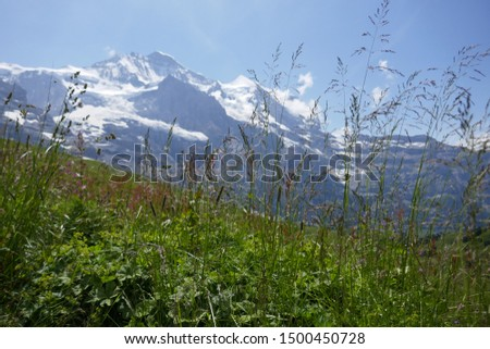 mountain world: Alpine landscape with Alpine vegetation in the foreground and view on the snowy mountains in the background #1500450728