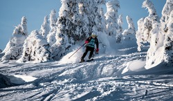 Mountaineer backcountry ski waling in the mountains. Ski touring in high alpine landscape with snowy trees. Adventure winter extreme sport.