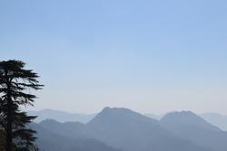 Mountainous Flora and Fauna of the Beautiful Himalayas