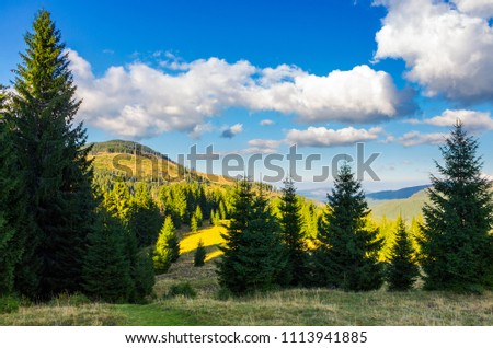mountainous forest and clouds. tall spruce trees on hillside. mountain peak and valley in the distance. gorgeous cloudscape. Location Apuseni Natural Park of Romania. wonderful nature background #1113941885