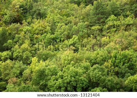 mountainous forest of Crimea. may be use like background