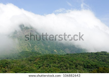 mountainous forest on the hill near Big Budda in Hong Kong