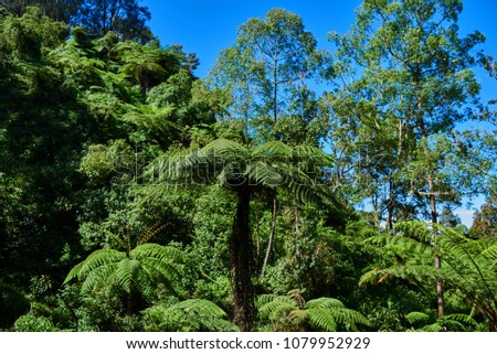Mountainous jungle with exotic trees. Magical scenery of rainforest. Wild, vivid vegetation of tropical forest. Tropical forest background. Tropical forest with blue sky. Travel and adventure concept #1079952929
