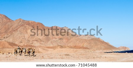 Mountains and camel caravan. Egypt