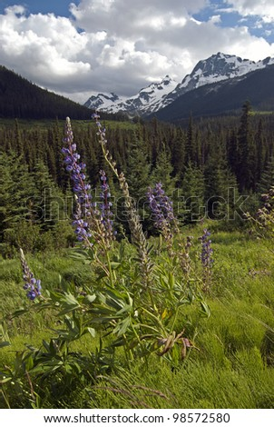 Mountains and wild flowers