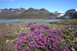 Mountains, glacier and glacial lake Morsarlon in Skaftafell National Park of Iceland. Beautiful landscape.