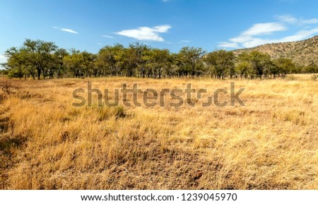 Mountains in Tanzania in the Ngorogoro Valley #1239045970