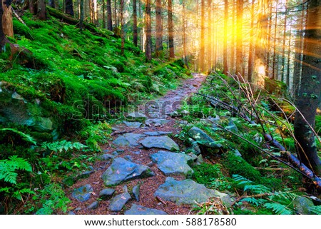mountains scene with pathway in green forest #588178580